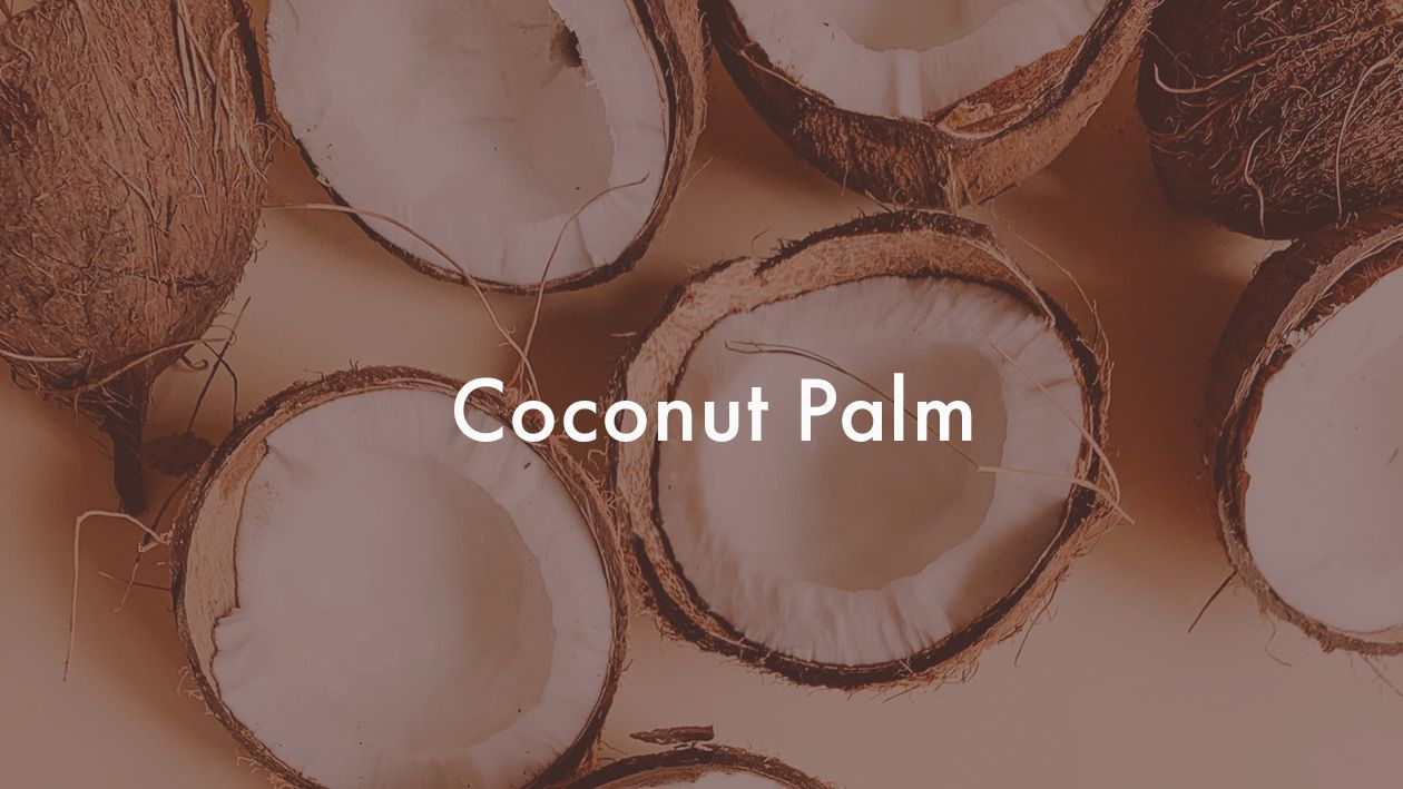 coconut palm  syrup recipe